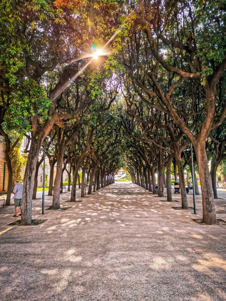 Lecci che incorniciano il viale di una villa nel sole