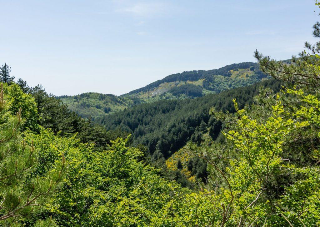 Aspromonte: paesaggio con poggi ricoperti di boschi e fitta vegetazione