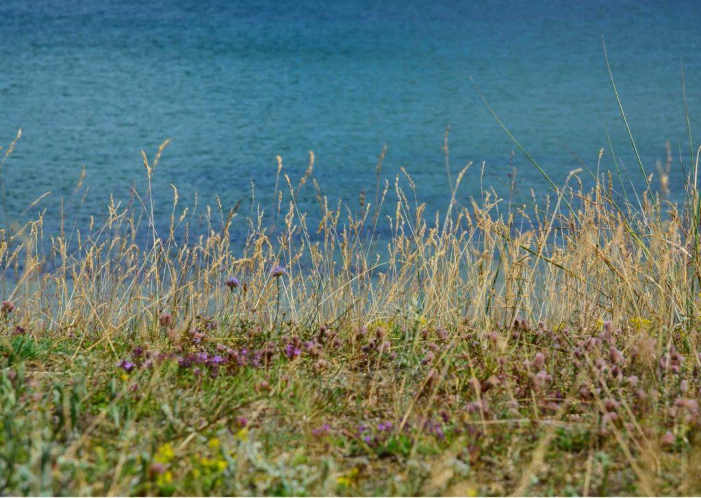 Smellscapes: che cosa sono. paesaggio olfattivo con mare ed erbe selvatiche