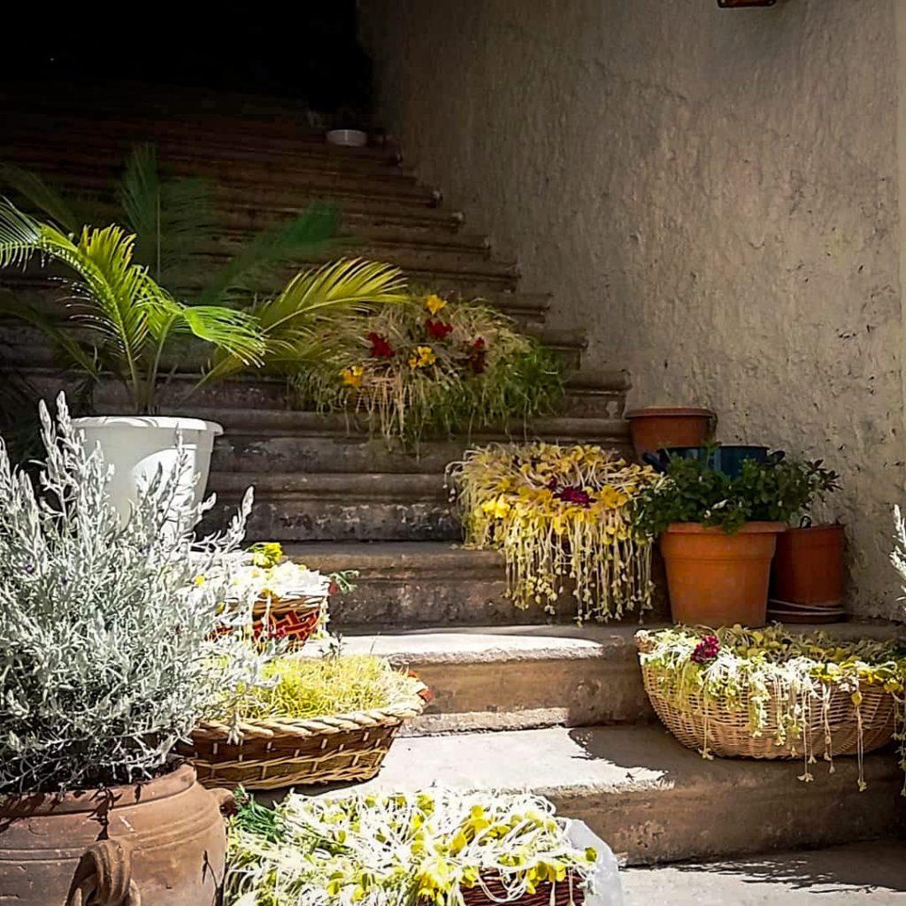 Scalinata del palazzo Nugent con molte piante disposte sui gradini di pietra