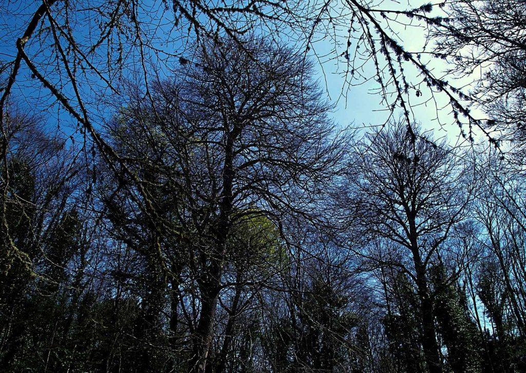 foresta umbra con alberi fitti e intricati