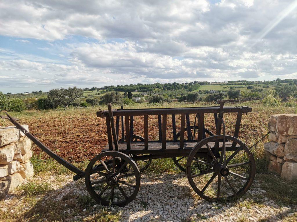 Trulli Caroli: carretto fra i muretti a secco, uliveti e campi sul fondo